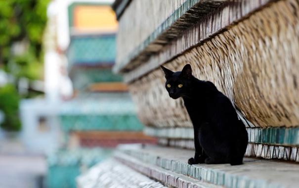 Фото обои кот, город, улица, черный, здание, рельеф