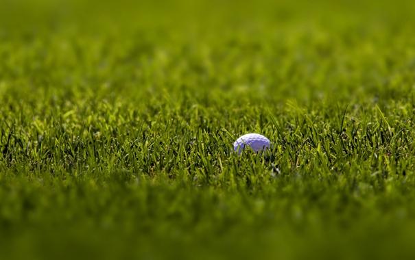 Фото обои фоновые картинки, трава, мячи, зелёный, белый, спорт, гольф