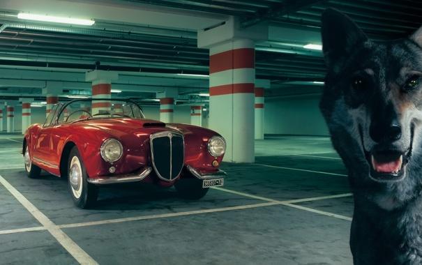 Фото обои красный, фон, волк, парковка, классика, 1954, передок