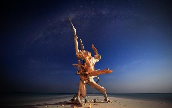 Фото обои море, вода, ночь, природа, фото, дерево, океан