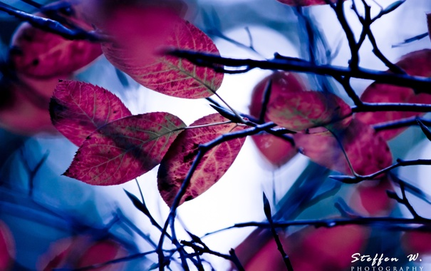 Фото обои листва, ветка, moonlight