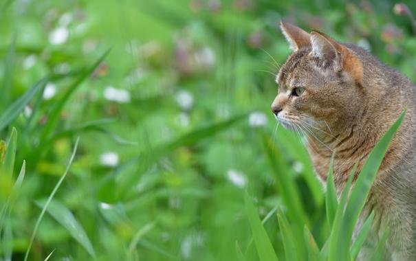 Фото обои кошка, трава, размытость