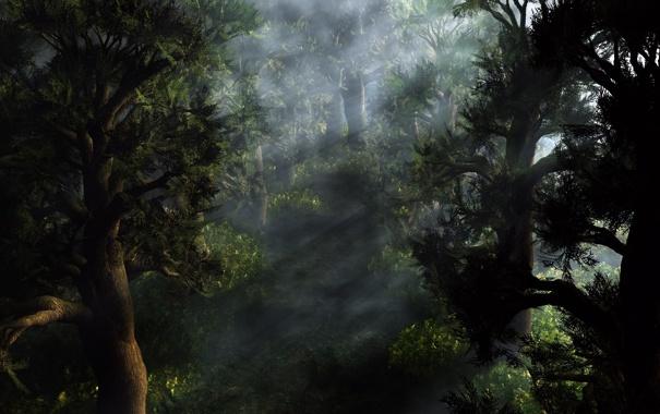 Фото обои лес, лучи, свет, деревья, рассвет, хвойный