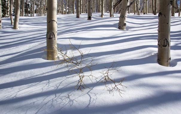 Фото обои зима, лес, снег, деревья, тень, роща