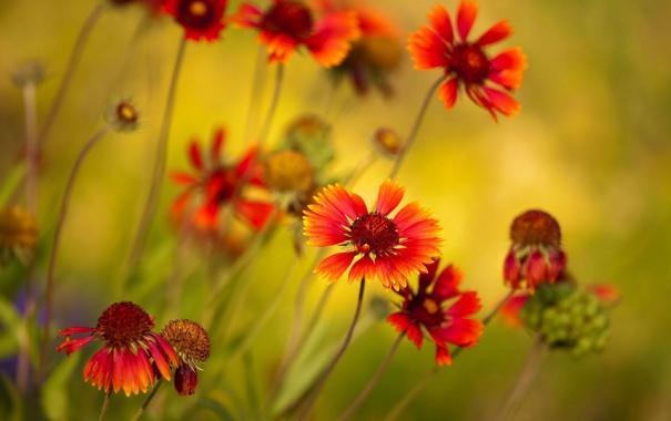Фото обои зелень, макро, яркие, растения, лепестки, оранжевые, снимок