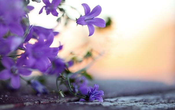 Фото обои макро, цветы, природа, фото, фон, обои, растения