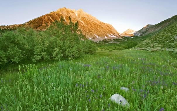Фото обои зелень, трава, цветы, горы, кустарник, яркая
