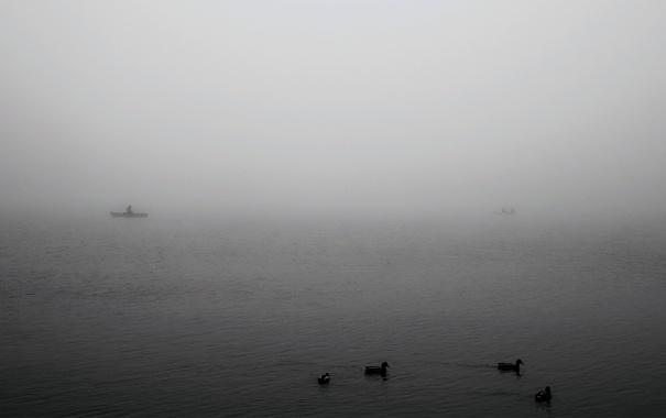 Фото обои море, животные, вода, птицы, туман, озеро, река