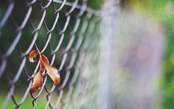 Фото обои забор, лист, макро