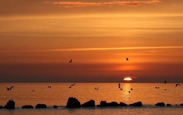 Фото обои море, закат, чайки