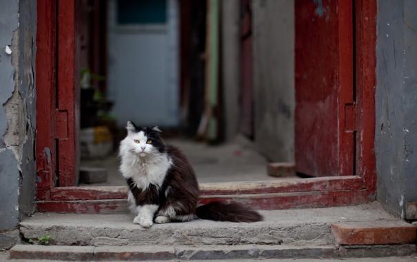 Фото обои кошка, фон, дверь