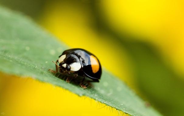 Фото обои лист, жук, Bug