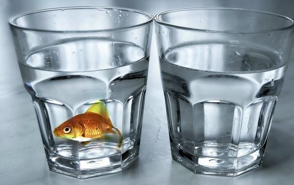 Фото обои фон, рыба, стаканы