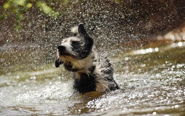 Фото обои вода, брызги, собака