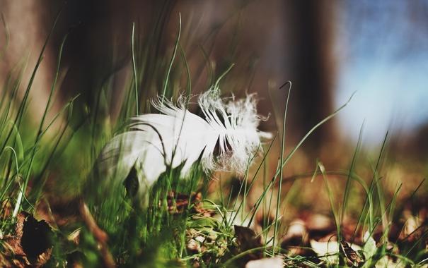Фото обои трава, макро, перо