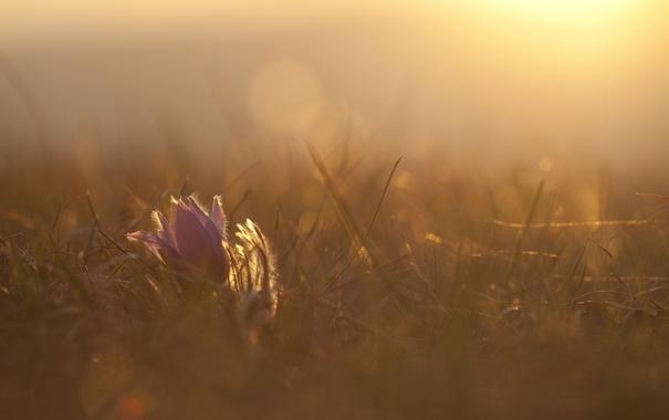 Фото обои цветок, трава, солнце, макро, свет, тепло, поляна
