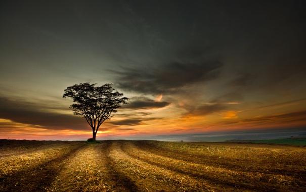 Фото обои поле, небо, облака, пейзаж, закат, дерево, Природа