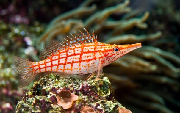 Фото обои кораллы, рыба, плавники