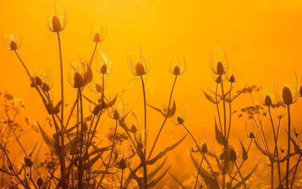 Фото обои небо, листья, макро, закат, цветы, растение, стебель