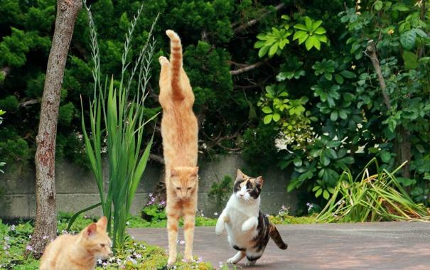 Фото обои прыжок, коты, ситуация, сад