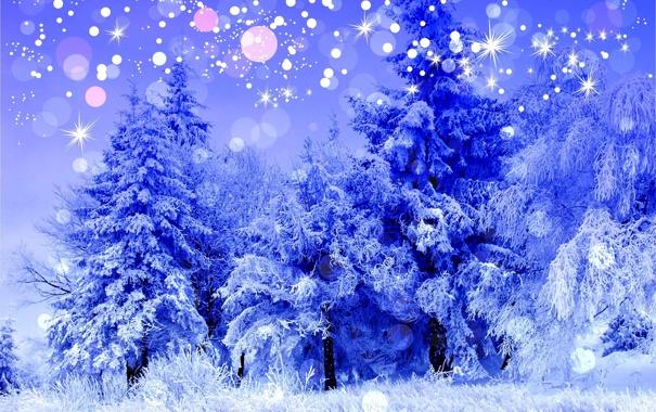 Фото обои холод, зима, лес, снег, деревья, пейзаж, синий