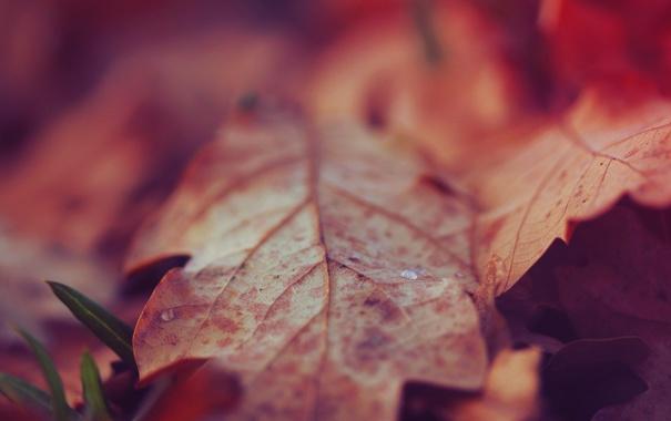 Фото обои осень, листья, макро, природа, земля, растения