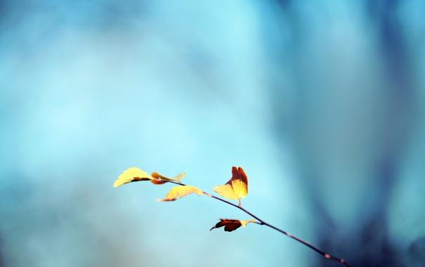 Фото обои осень, небо, листья, веточка, фон, желтые, бирюза