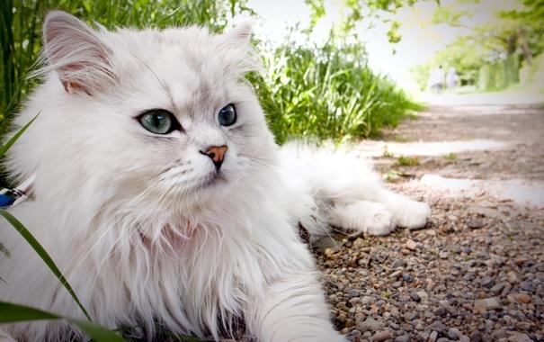 Фото обои кошка, лето, взгляд