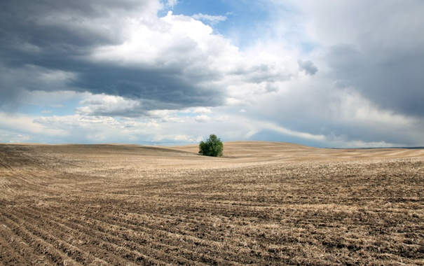 Фото обои пейзаж, поле, небо, куст