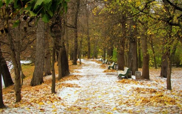 Фото обои осень, снег, пейзаж, парк, октябрь, аллея, первый снег