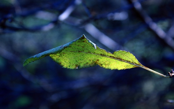 Фото обои макро, природа, ветка, листик