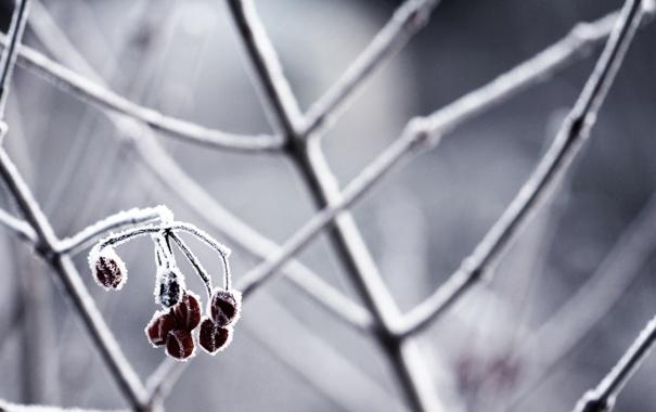Фото обои зима, макро, снег, ветки, природа, фокус, nature