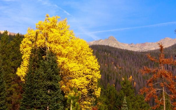Фото обои осень, лес, листья, деревья, пейзаж, горы