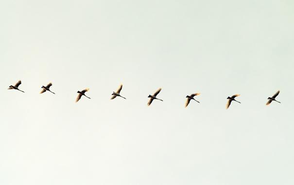 Фото обои небо, птицы, минимализм, полёт