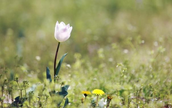 pole-cvetok-leto-priroda.jpg