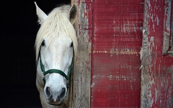 Фото обои фон, стена, конь