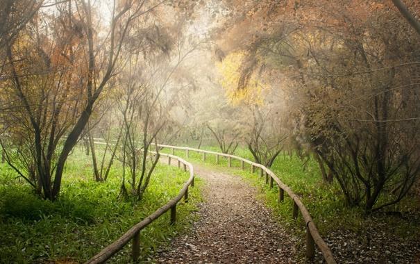 Фото обои дорога, пейзаж, парк