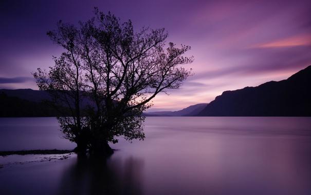 Фото обои закат, горы, дерево, водная гладь