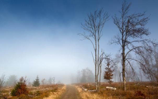 Фото обои дорога, осень, деревья, туман