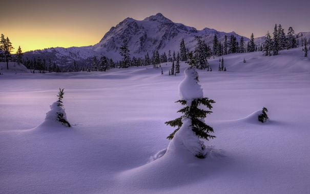 Фото обои зима, снег, горы, природа, ёлки
