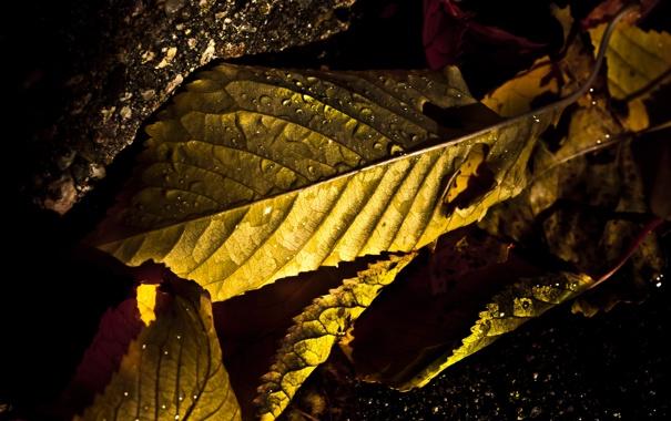 Фото обои осень, листья, капли, свет, фото, макросъемка, ракурс