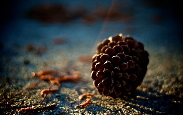 Фото обои макро, природа, фото, земля, обои, размытость, шишка