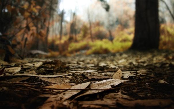 Фото обои осень, лес, листья, макро, природа