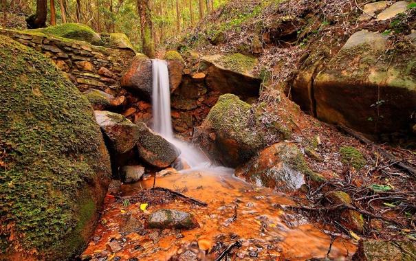 Фото обои лес, природа, ручей, камни