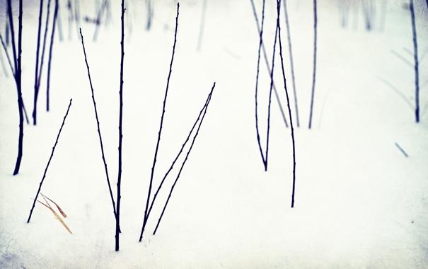 Фото обои снег, цветы, Зима