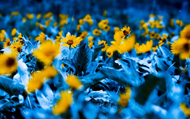 Фото обои растения, сады, фотографии, природа, цветы