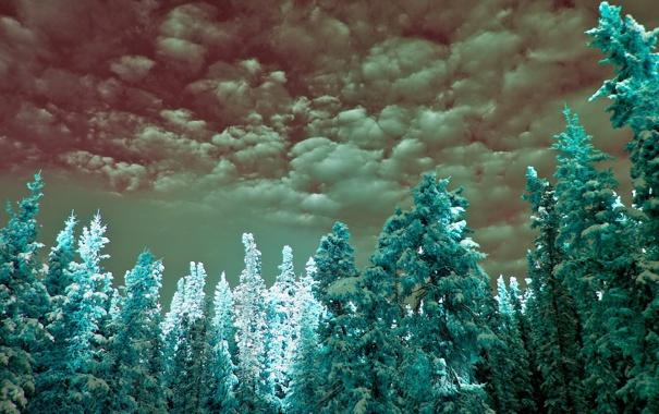 Фото обои sky, clouds, infrared, cyan, spruce
