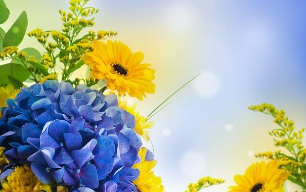 Фото обои блики, голубой, герберы, флокс