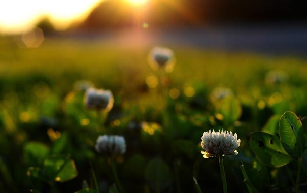 Фото обои трава, листья, солнце, макро, лучи, свет, цветы