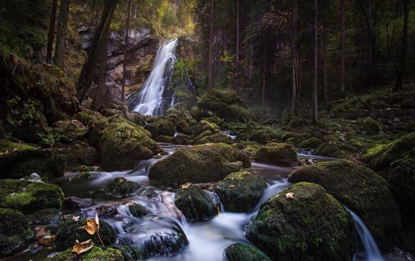 Фото обои лес, деревья, камни, водопад, природа. река